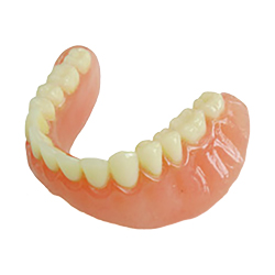bottom a dentures model