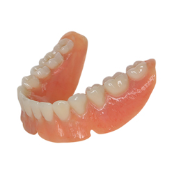 bottom c premium dentures model